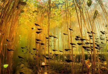 Tadpoles by Eiko Jones
