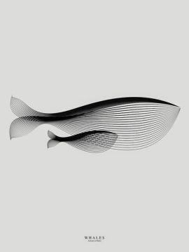 Whales - Naoki Sakai