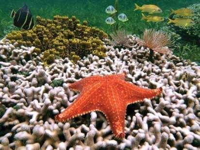 coral bleaching costa rica