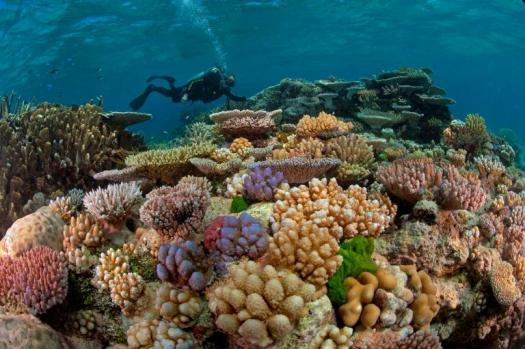 ngeo reef